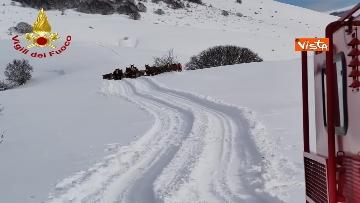 11 - Neve a Castelluccio di Norcia, cingolati dei Vigili del Fuoco soccorrono mandria di 51 cavalli