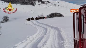 10 - Neve a Castelluccio di Norcia, cingolati dei Vigili del Fuoco soccorrono mandria di 51 cavalli