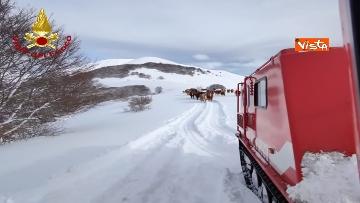 12 - Neve a Castelluccio di Norcia, cingolati dei Vigili del Fuoco soccorrono mandria di 51 cavalli