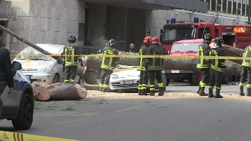 10 - Maltempo, paura in centro a Roma crolla un albero in Viale Mazzini, 2 feriti gravi
