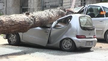 15 - Maltempo, paura in centro a Roma crolla un albero in Viale Mazzini, 2 feriti gravi