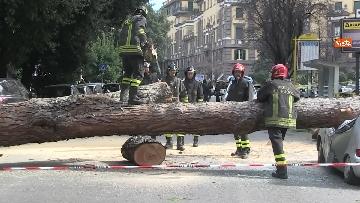 17 - Maltempo, paura in centro a Roma crolla un albero in Viale Mazzini, 2 feriti gravi