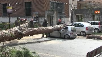 16 - Maltempo, paura in centro a Roma crolla un albero in Viale Mazzini, 2 feriti gravi
