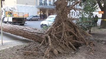 5 - Maltempo, paura in centro a Roma crolla un albero in Viale Mazzini, 2 feriti gravi