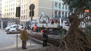 6 - Maltempo, paura in centro a Roma crolla un albero in Viale Mazzini, 2 feriti gravi