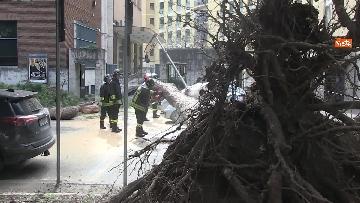 12 - Maltempo, paura in centro a Roma crolla un albero in Viale Mazzini, 2 feriti gravi