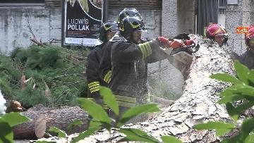 14 - Maltempo, paura in centro a Roma crolla un albero in Viale Mazzini, 2 feriti gravi