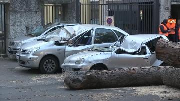 7 - Maltempo, paura in centro a Roma crolla un albero in Viale Mazzini, 2 feriti gravi