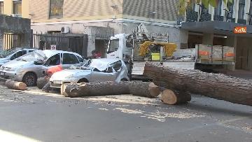 3 - Maltempo, paura in centro a Roma crolla un albero in Viale Mazzini, 2 feriti gravi