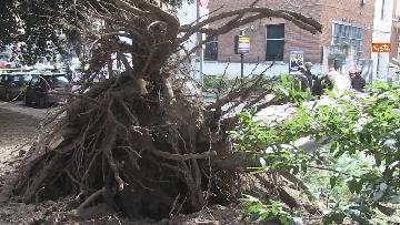 13 - Maltempo, paura in centro a Roma crolla un albero in Viale Mazzini, 2 feriti gravi
