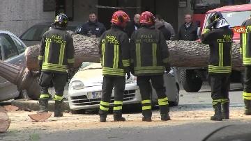 11 - Maltempo, paura in centro a Roma crolla un albero in Viale Mazzini, 2 feriti gravi