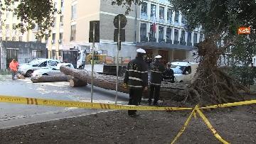 1 - Maltempo, paura in centro a Roma crolla un albero in Viale Mazzini, 2 feriti gravi