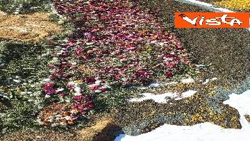 3 - San Pietro e Paolo, tappeto di colori a Via della Conciliazione per la tradizionale infiorata