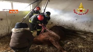 8 - Cavallo in difficoltà a Parma, i Vigili del nucleo SAF intervengono in suo soccorso
