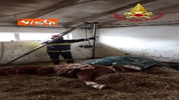 9 - Cavallo in difficoltà a Parma, i Vigili del nucleo SAF intervengono in suo soccorso