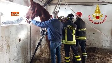 3 - Cavallo in difficoltà a Parma, i Vigili del nucleo SAF intervengono in suo soccorso