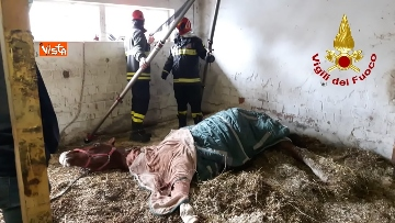 2 - Cavallo in difficoltà a Parma, i Vigili del nucleo SAF intervengono in suo soccorso
