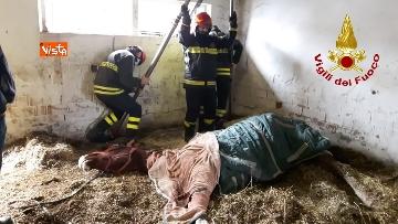 5 - Cavallo in difficoltà a Parma, i Vigili del nucleo SAF intervengono in suo soccorso
